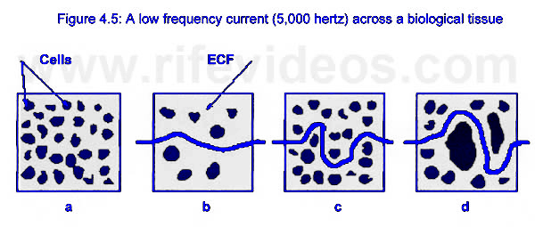 Bio-Electrical Impedance Photo #9