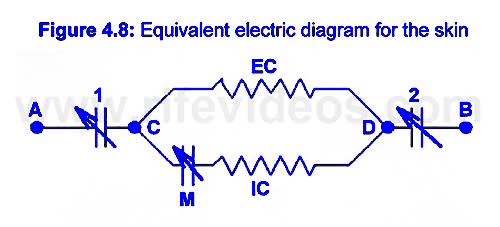 Bio-Electrical Impedance Photo #12